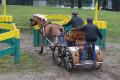 Haflinger Fahrsport, Turnier Riesenbeck 2013