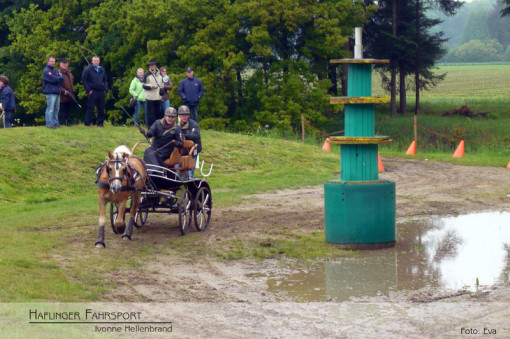 Haflinger Fahrsport, Turnier Riesenbeck, Pferdesport mit Handicap, Ivonne Hellenbrand