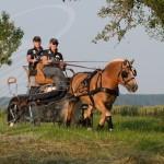 """Team Hellenbrand"", Haflinger Fahrsport,"