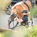Pferdesport, Handicap