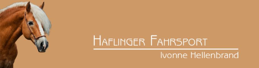 Haflinger Fahrsport, Behinderung, Rollstuhl, Ivonne Hellenbrand